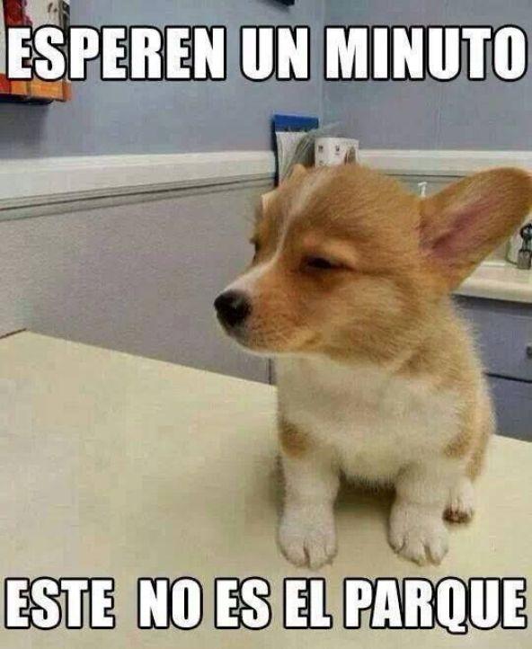 memes-whatsapp-de-animales-5