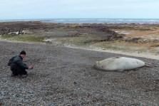 Avec un éléphant de mer en Patagonie argentine