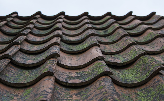 Reviving A Tired Looking Roof Isn't That Hard! Here's How I Did It