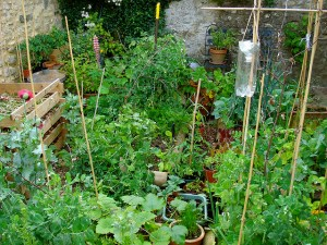 Getting The Best Yield From Your Vegetable Patch