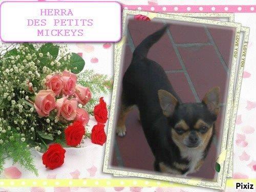 HERRA DES PETITS MICKEYS