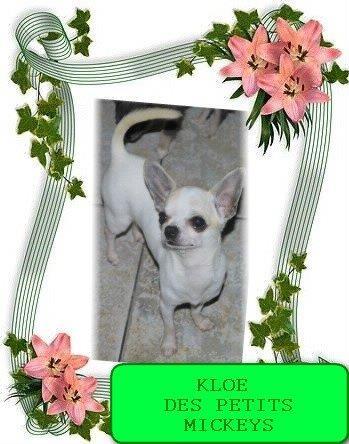 KLOE DES PETITS MICKEYS (1)