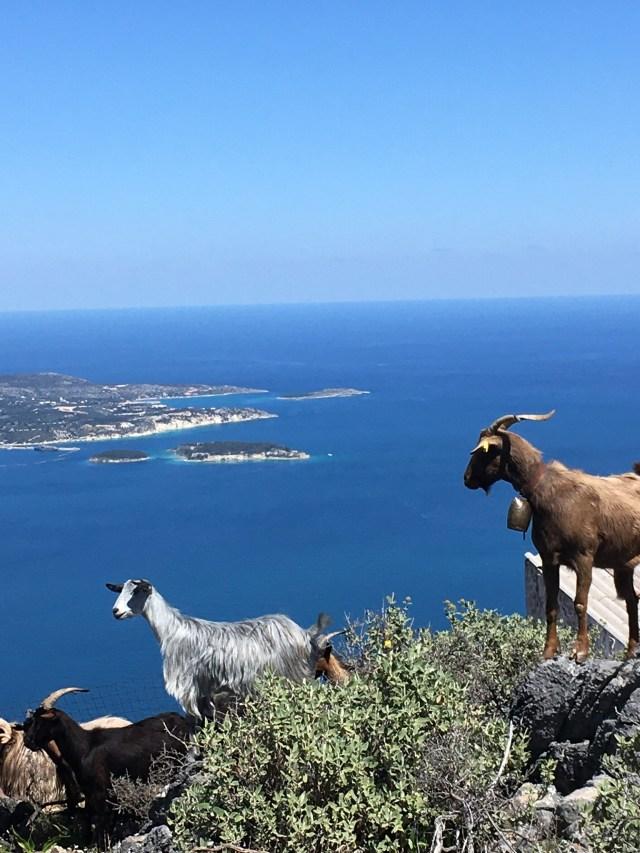 Goats of Crete