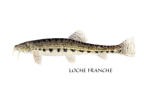 lochefranche
