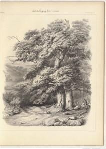 dessin, arbre, paysage