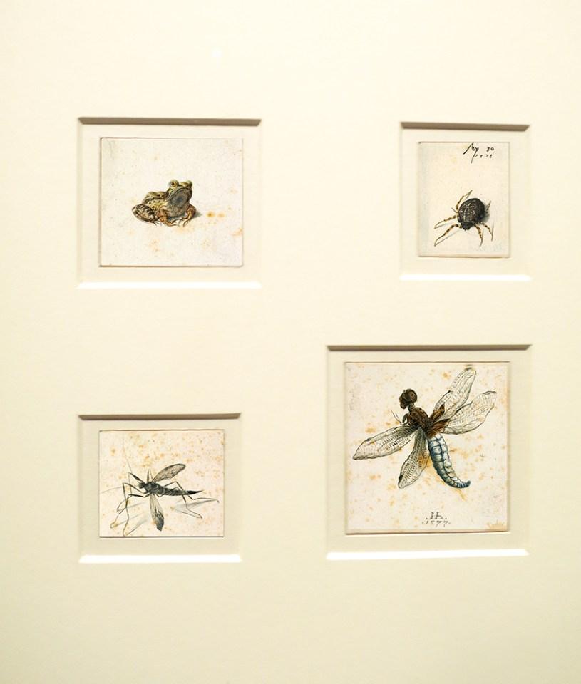 dessin grenouille, araignée, libellule, tipule