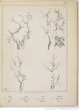 dessin de paysage, arbre, branche