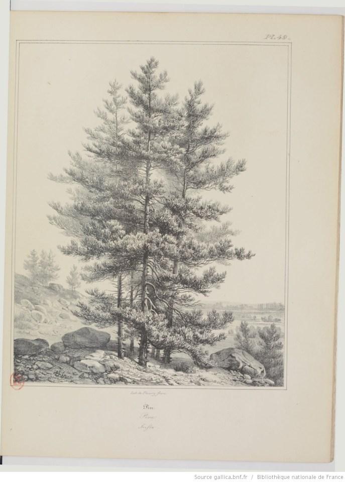 dessiner des pins