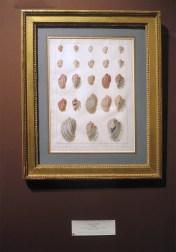 planche de coquillages de Jean Gabriel Pretre