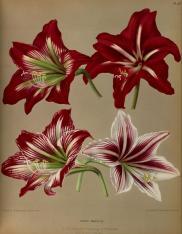 planche de l'Album van Eeden : Haarlem's flora