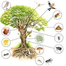 écosystème de la trogne