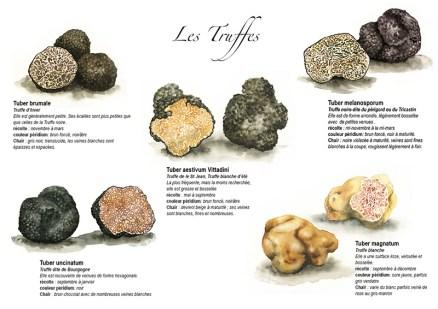 Truffes de France