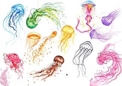 quelques meduses
