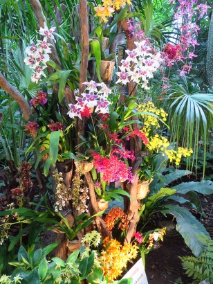 orchidee9