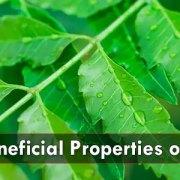 Best-Beneficial-Properties-of-Neem