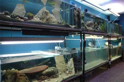 Locarium | fishroom | fishouse du Tanganyika.