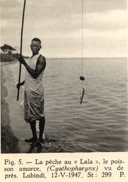 """Pêche aux hameçons, pêche au """"lala"""" avec un Cyathpharynx furcifer comme appât."""