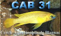 Cab 31 et Robert Marcel.