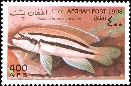 Chalinochromis bifrenatus de la poste afghane.