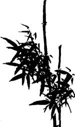bambou chinois