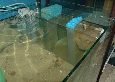 Décantation pour aquarium de 450 litres | pour cichlidés du Tanganyika .