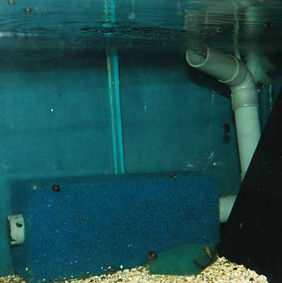 Filtration par pain de mousse pour petit aquarium & aquariums de moyen gabarit .