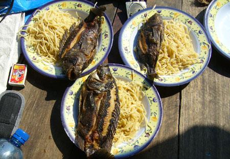 Petrochromis frits