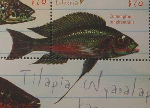 Cunningtonia longiventralis, timbre de cichlidé du lac Tanganyika.