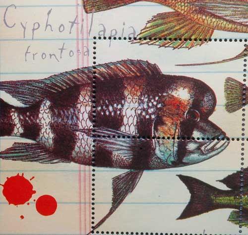 Représentation philatélique de Cyphotilapia, poste du Liberia.