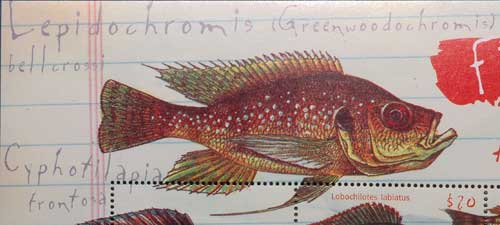 Grennwoodochromis belcrossi | planche de collection | timbre.