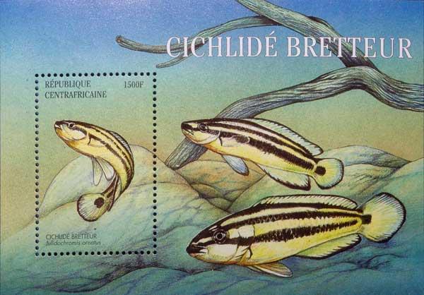 Planche philatélique de collection, émise par la République Centrafricaine | Julidochromis ornatus.