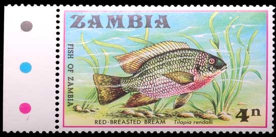 Tilapia rendalli de Zambie.