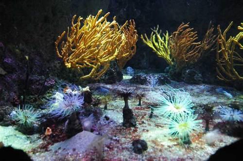 Coraux et Anémones de méditérrannée