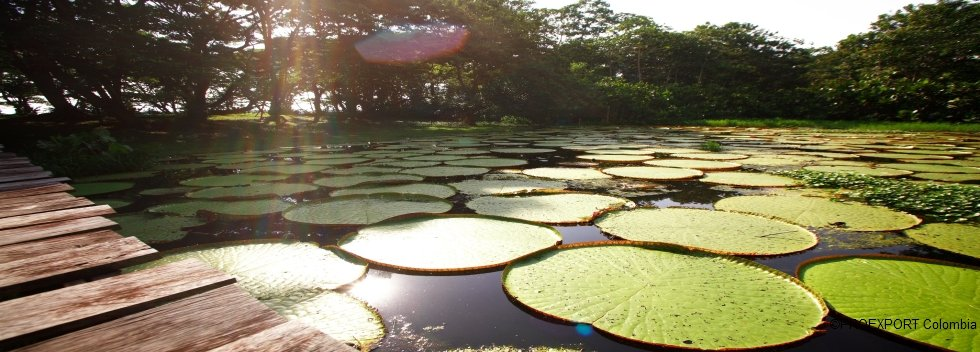 Destination Leticia et la Forêt d'Amacayacu, Amazone