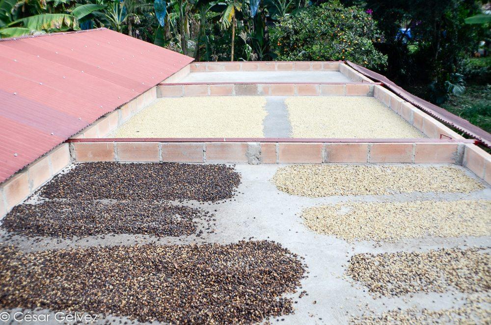 Différents grains de café colombien, entreposés sur des toits