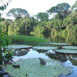 parc naturel de la Macarena