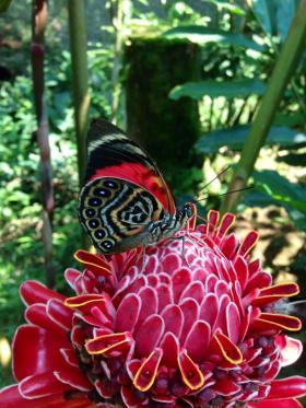 Papillon, au Centre Paway