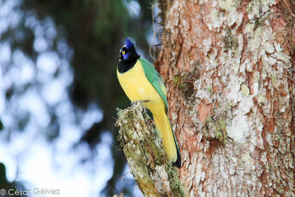 Top 3 des lieux les plus fous pour faire de l'écotourisme en Colombie !