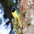 Ecotourisme en Colombie