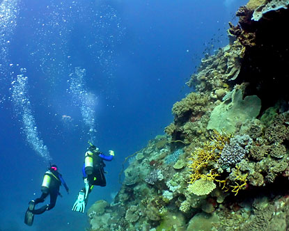 Scuba Diving In Australia Australia Scuba Diving Resorts