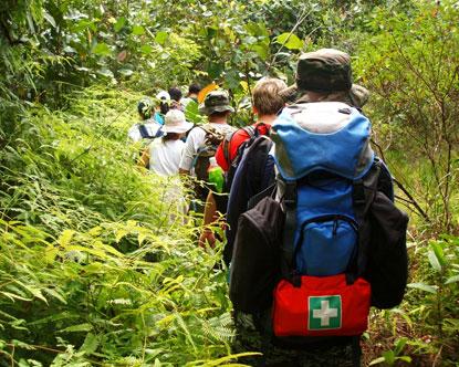 Trekking in a Jungle