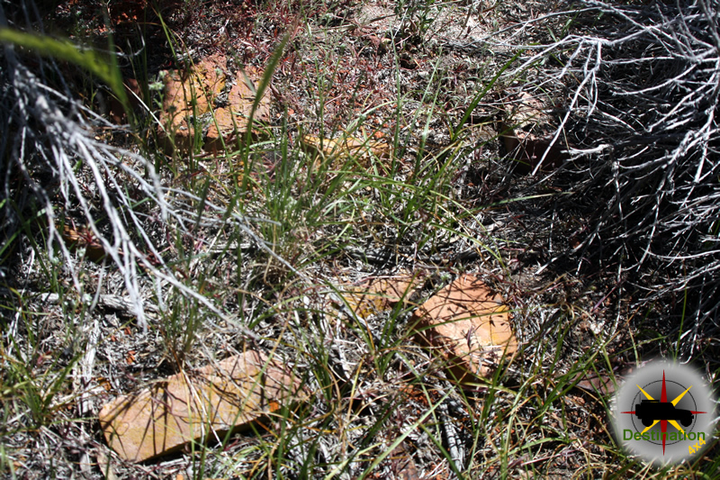 Remains of Aurora bricks found deep in the undergrowth. Photograph by James L Rathbun
