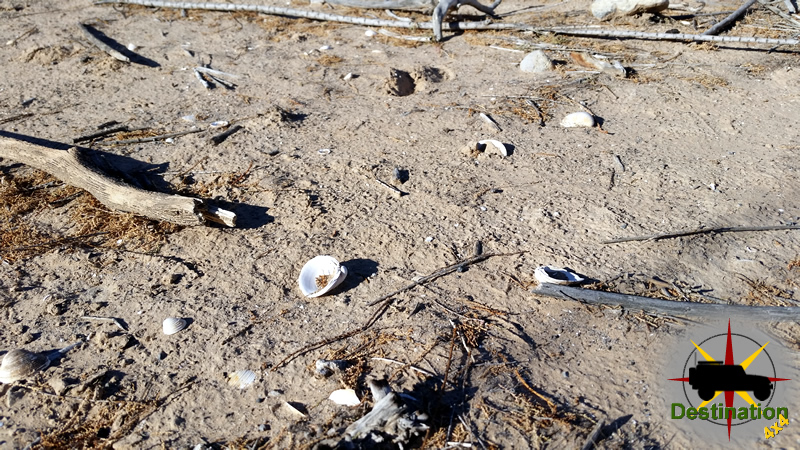 Fresh Water Clam shells litter the area around St. Thomas Ghost town