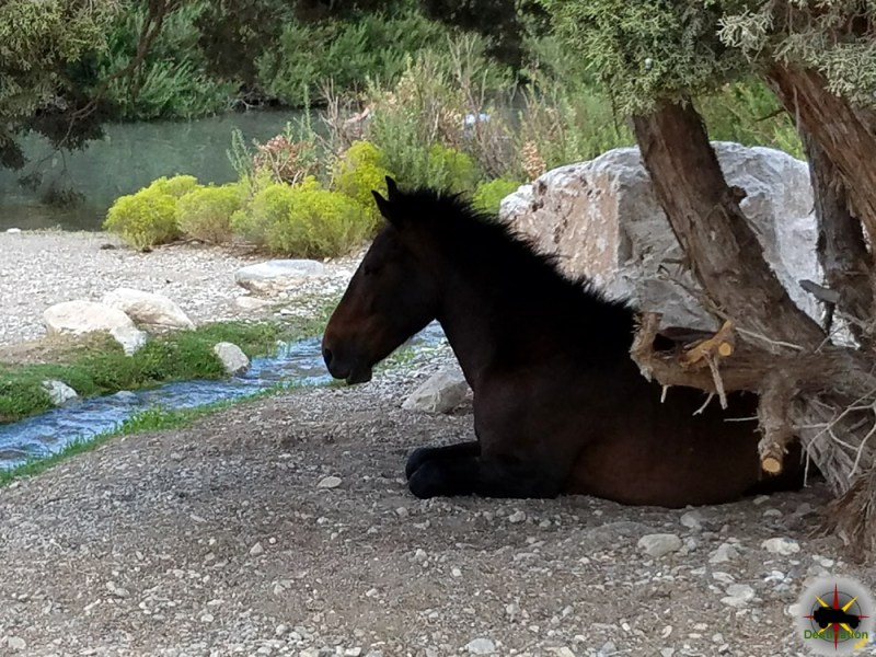 A mustang taking in some shade next to a pool of water.