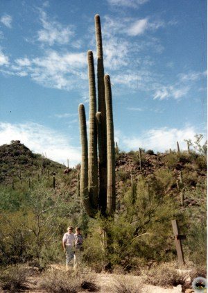 A monster Saguaro ( Carnegiea gigantea) - Photo by Sister Cecilia Joseph Wight