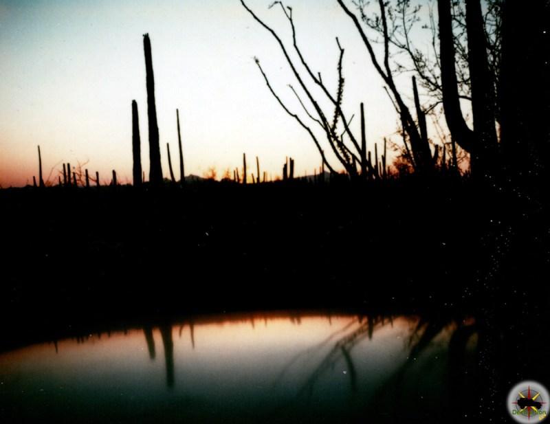 Saguaro Cacti break the evening skyline near Tucson Arizona - Photo by Sister Cecilia Joseph Wight