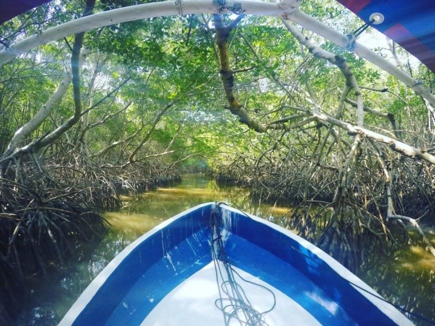 Destination Addict - Cruising through the mangroves in Celestún,  Mexico