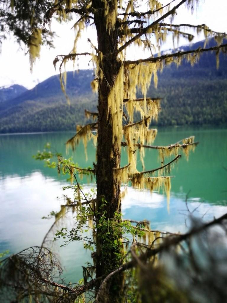 Destination Addict - Hiking right alongside Cheakamus Lake, near Whistler British Columbia, Canada
