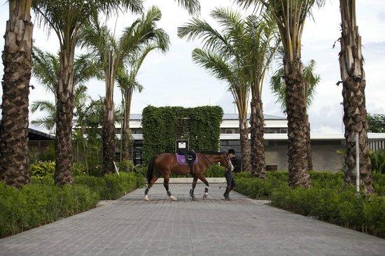 bali-equestrian-centre