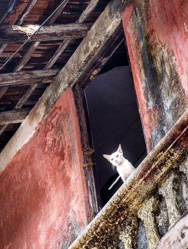 Cat watching bird in the streets of Panjim